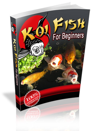 koi-pond-koi-fish-breed-koi
