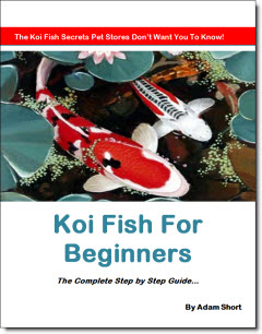 Koi fish for beginners koi fish ponds keeping koi for Koi fish living conditions