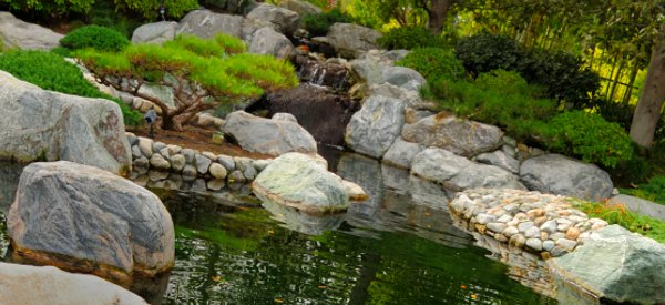 Keeping healthy koi in the perfect koi pond for Koi pond keeping