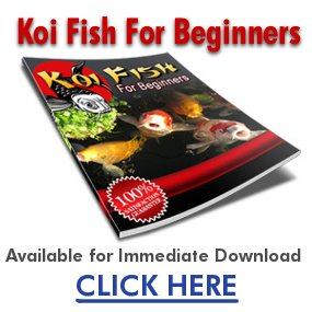 Koi fish koi pond koi care for Decorative pond fish crossword