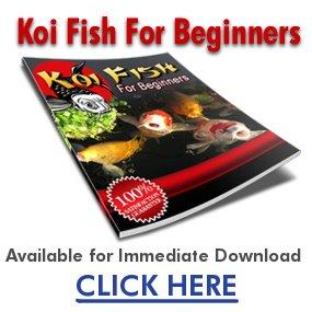 starting the koi fish hobby